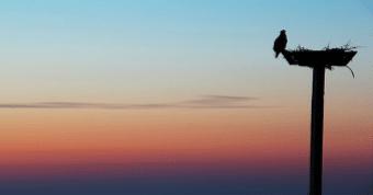 Populiariausios QMDJ aktyvacijos Paukštis krenta i savo lizdą